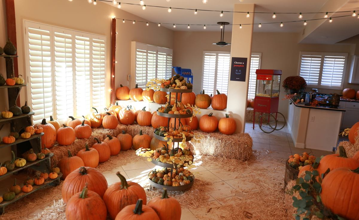 Thanks For Coming To Opendoor S In Home Pumpkin Patch